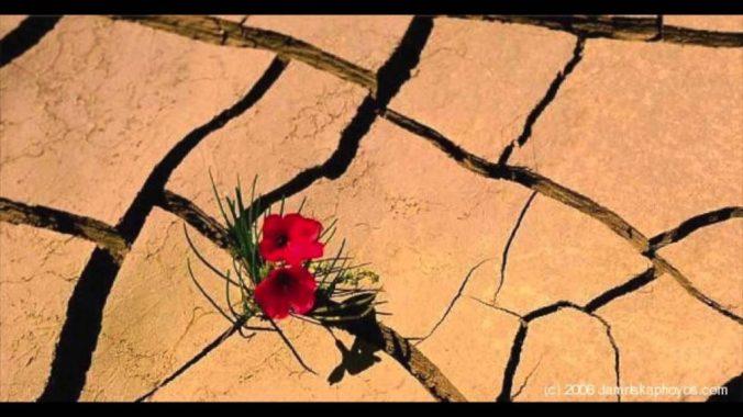 resilienza.jpg